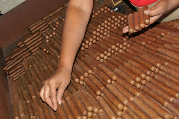 Fabrication des cigares : cigares terminés