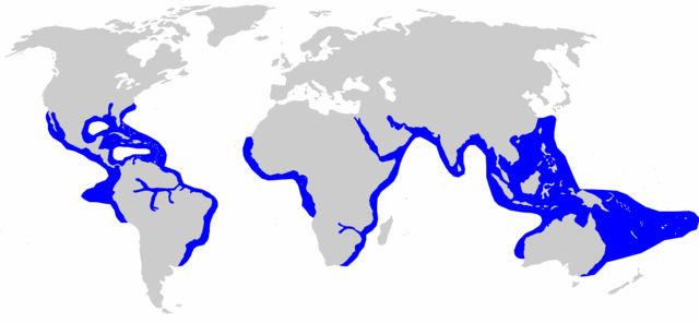 Carte de répartition du Carcharhinus Leucas