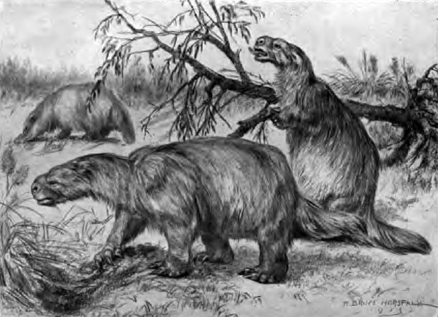 Illustration Mylodon Robustus