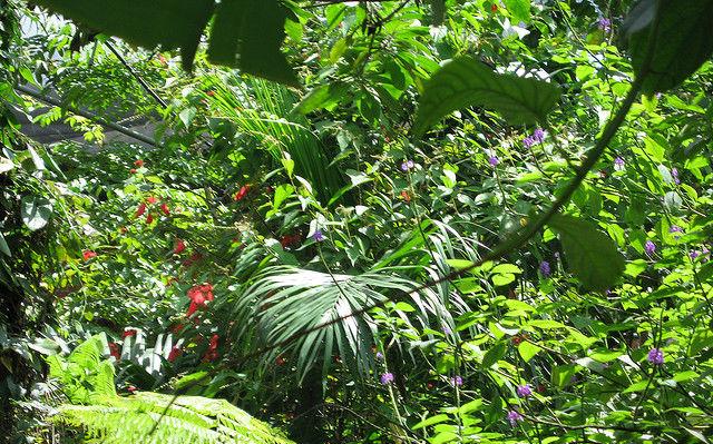 Végétation dans le musée National du Costa Rica